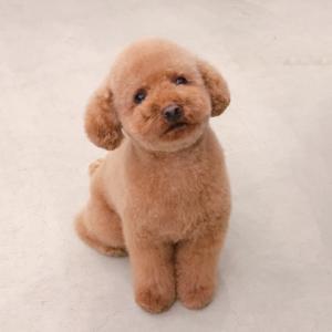 犬の体とよくある病気(4)早期対応で未然に防げる「乳腺腫瘍」「子宮蓄膿症」