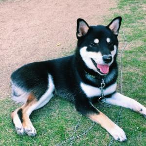 犬の体とよくある病気(5) | 老犬に多い「甲状腺機能低下症」