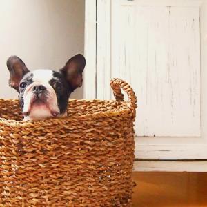 犬のシビアなお金の話 | 病気予防と医療費を抑えるには?