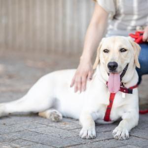 無料で学べる「犬学」のオンラインコース2種の紹介