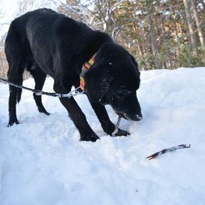山を歩かせていたら、なんだか15歳老犬が元気になってきた。