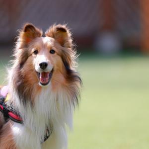 「読書犬」をご存知ですか?   人と犬との関わりを考える