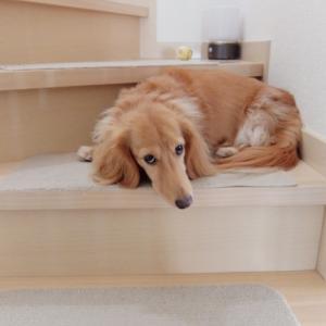 犬とアロマセラピー   香りでコミュニケーション