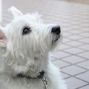 犬のアロマを学びたい方へ、知っておいてほしい『基本事項』のはなし