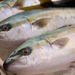 犬の手作りごはんと魚の栄養学(3)   ビタミンD