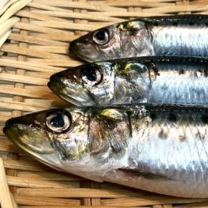 犬のごはんと魚の栄養学(4)「DHA」「EPA」