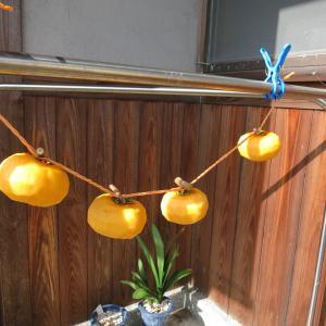 本日の吊るし柿、イソ菊の花など