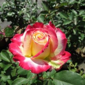 5月の写真と可愛い花器