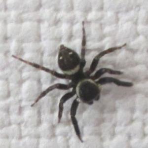 目の前に小さなクモが・・・・