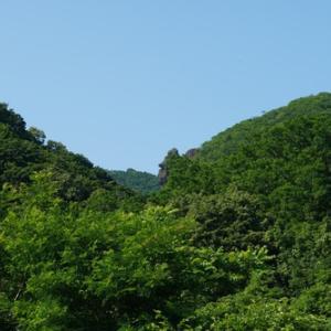 マウンテンゴリラの岩
