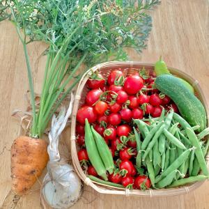 今年の奇形野菜
