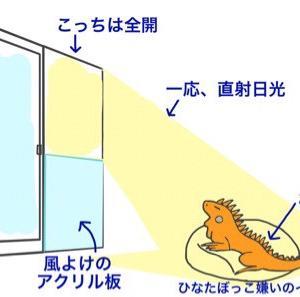 冬のひなたぼっこ(ゲイトの場合)