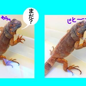 乾燥の季節にお風呂って大事!