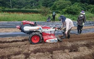 農業体験 元気に野菜育っています