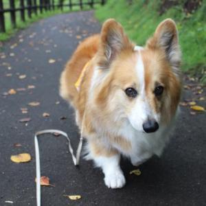 散歩より・・・