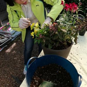 FloraRIEで寄せ植えレッスン