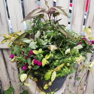 アレンジメントのような華やかな寄せ植え&大宮マスク納品
