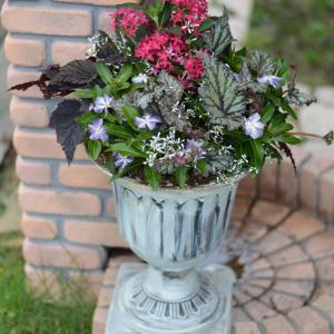 アレンジメントのような華やかな寄せ植えと花手水WS