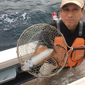 10月20日の釣果です。アオリイカ餌釣りに行って来ました〜!