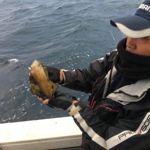 12月6日の釣果です。アオリイカ餌釣りに行って来ました〜!