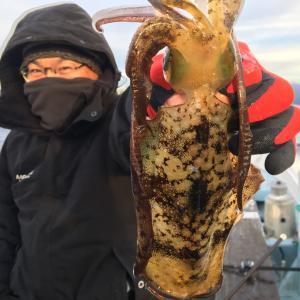 12月11日の釣果です。アオリイカ餌釣りに行って来ました〜!