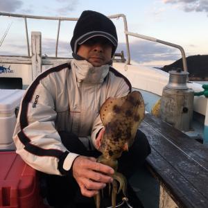 12月14日の釣果です。アオリイカ餌釣りに行って来ました〜!