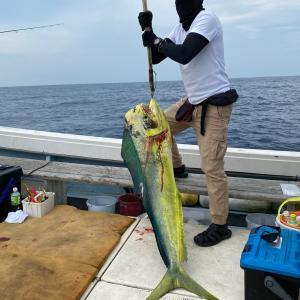 7月22日の釣果です。カツオ、マグロ沖合い遠征に行って来ました〜!
