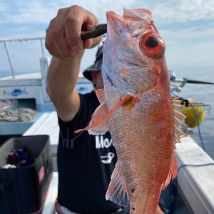 8月3日の釣果です。中深海アカムツ狙いに行ってきました〜!