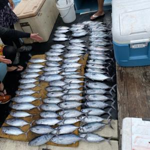 9月16日の釣果です。カツオ、オキアミ完全流し釣りに行って来ました〜!