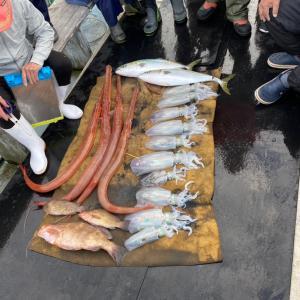 10月18日の釣果です。アオリイカエサ釣りに行って来ました〜!
