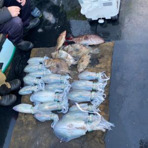 12月2日の釣果です。アオリイカエサ釣りに行って来ました〜!