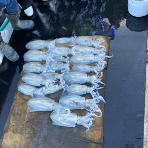 12月3日の釣果です。アオリイカエサ釣り&ティップランに行って来ました〜!