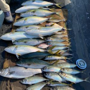 6月8日の釣果です。イサギ、真鯵天秤流し釣り&ヒラスズキ 、メジロキャスティングに行って来ました