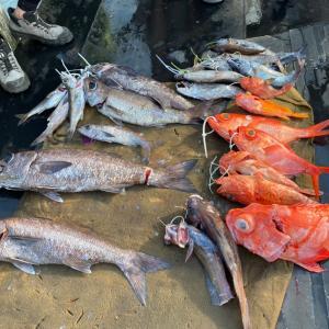 6月21日の釣果です。スロージギングアカムツ&オニカサゴ狙いに行って来ました〜!