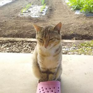 今日の写真(猫)