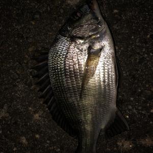 潮見橋で夜釣り