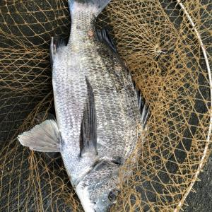 6月15日の朝の釣り