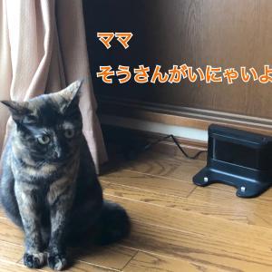 見守り隊〜メイちゃん編〜