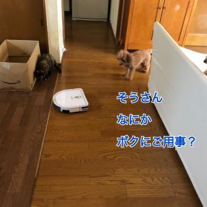 見守り隊〜レイちゃん編〜