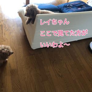見守り隊〜キイちゃん編〜