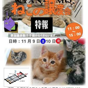 【11/09-10】特報!保護猫の譲渡会~子猫が沢山参加~