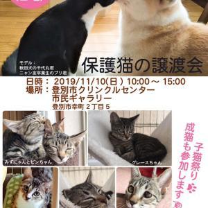 【11/10】登別市クリンクルセンター 市民ギャラリー 保護猫の譲渡会