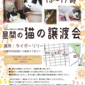 【11/17】タイガーリリー昼間の譲渡会