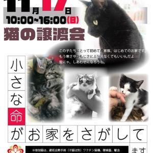 【11/17】保護猫達の譲渡会atジョイフルAK 大曲店