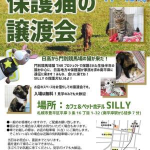 【11/23】日高から門別競馬場の猫が来た! 〜純朴なボクらの札幌遠征〜