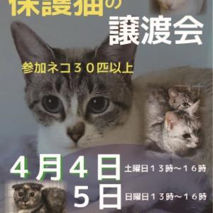 【04/04-04/05】譲渡会のお知らせ