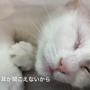 【札幌市内238匹多頭飼育崩壊】幸せに暮らしてほしい