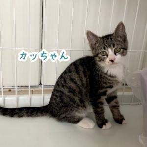 【保護ニャン】カッちゃん