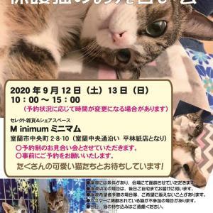 【9/12】キャットラウンジでの譲渡会中止のお知らせ