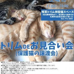 【09/26】トリムDEお見合い会(保護猫の譲渡会)